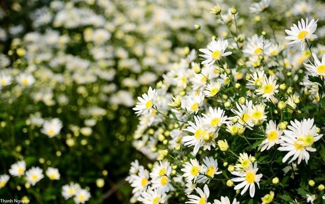 Hoa xuống phố, những chiều cuối năm - anh 12