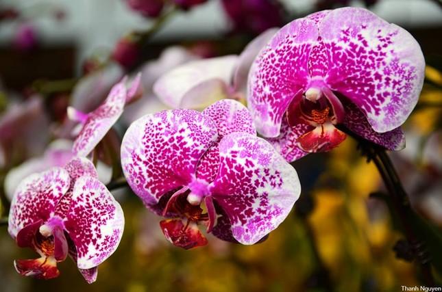 Hoa xuống phố, những chiều cuối năm - anh 9