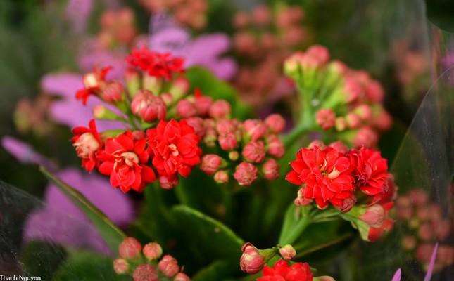 Hoa xuống phố, những chiều cuối năm - anh 10