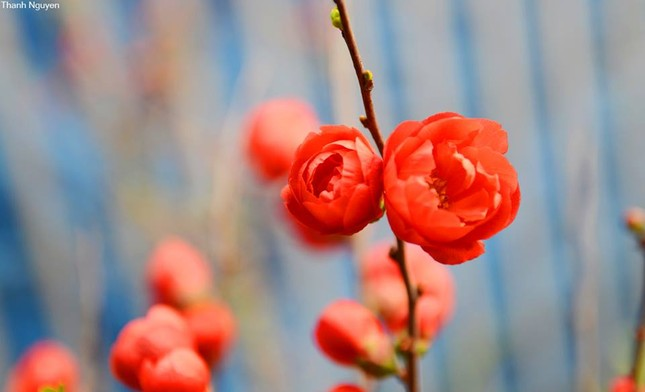 Hoa xuống phố, những chiều cuối năm - anh 11