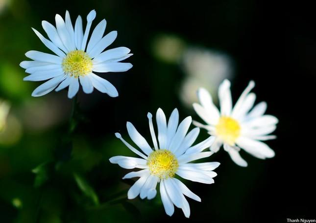 Hoa xuống phố, những chiều cuối năm - anh 2