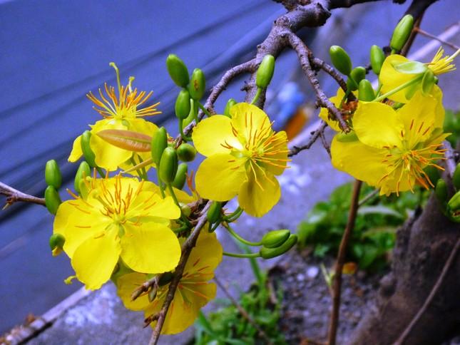 Người Việt năm châu tưng bừng đón Tết cổ truyền 2015 - anh 2
