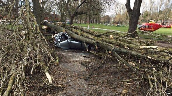 Đức: 7 người chết do gió bão ập đến bất ngờ - anh 2