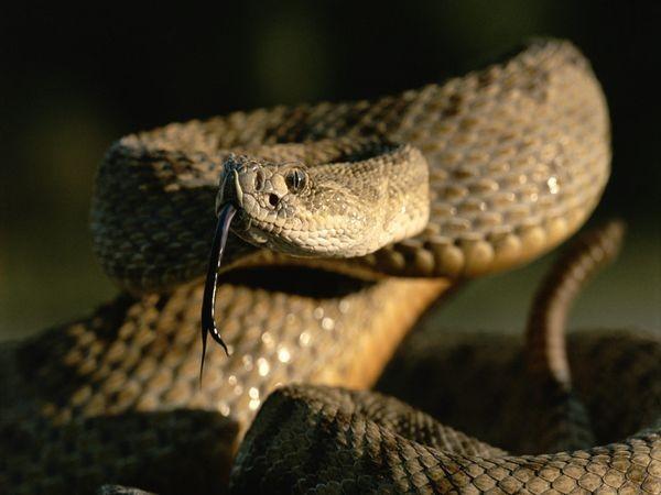 TOP những loài rắn độc nhất hành tinh [Video] - anh 3