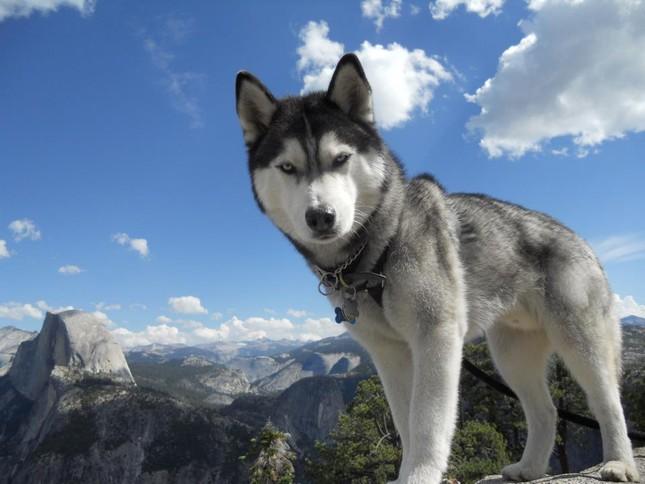 Top 5 loài chó thông minh nhất thế giới - anh 1