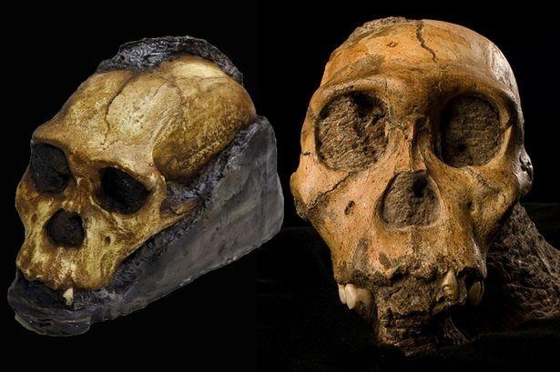 Phát hiện mô da hóa thạch 2 triệu năm của tổ tiên loài người - anh 1