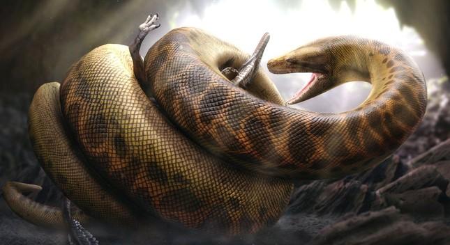 Sự thật về Titanoboa - Quái vật rắn khổng lồ nhất lịch sử Trái đất - anh 3