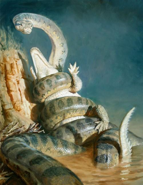 Sự thật về Titanoboa - Quái vật rắn khổng lồ nhất lịch sử Trái đất - anh 4