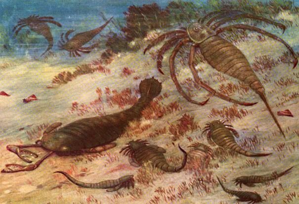 Bọ cạp biển dài 2,5m - Quái vật khổng lồ thời tiền sử - anh 1