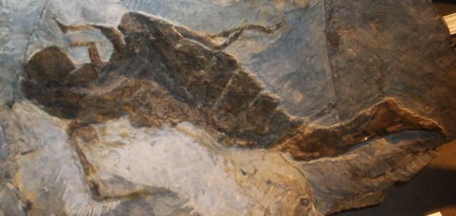 Bọ cạp biển dài 2,5m - Quái vật khổng lồ thời tiền sử - anh 4