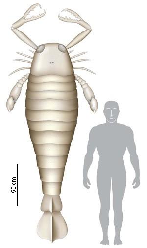 Bọ cạp biển dài 2,5m - Quái vật khổng lồ thời tiền sử - anh 3