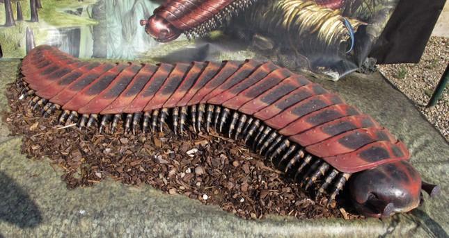 Bọ cạp biển dài 2,5m - Quái vật khổng lồ thời tiền sử - anh 2