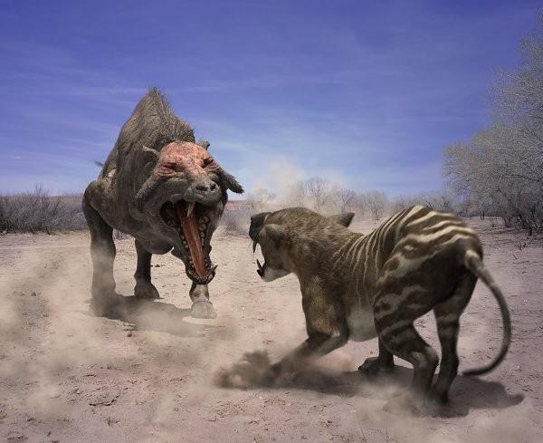 Entelodon - Động vật săn mồi hung tợn nhất lịch sử Trái đất - anh 4