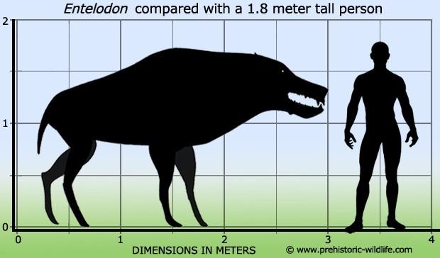 Entelodon - Động vật săn mồi hung tợn nhất lịch sử Trái đất - anh 3