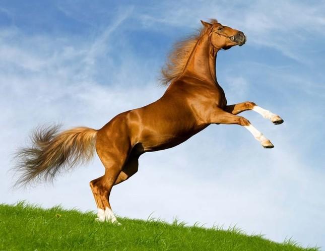 Khám phá thế giới bí mật của loài ngựa - anh 1