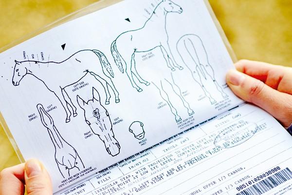 Khám phá thế giới bí mật của loài ngựa - anh 3