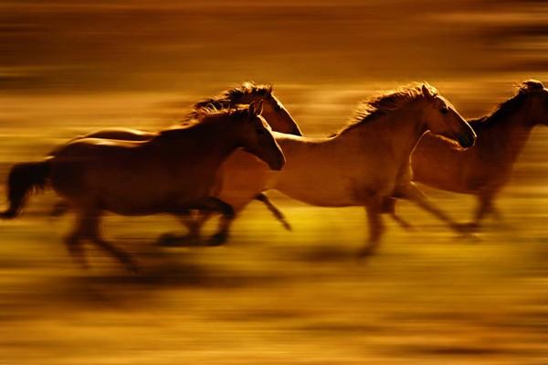 Khám phá thế giới bí mật của loài ngựa - anh 2
