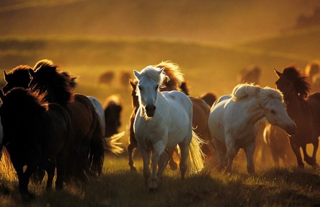 Khám phá thế giới bí mật của loài ngựa - anh 4