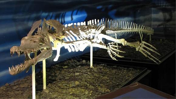 Quái vật Purussaurus - Loài cá sấu lớn nhất, hung tợn nhất trong lịch sử Trái đất - anh 3