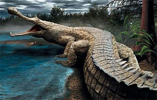 Quái vật Purussaurus - Loài cá sấu lớn nhất, hung tợn nhất trong lịch sử Trái đất - anh 2