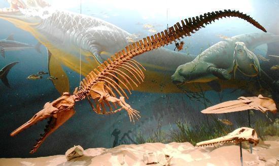 Basilosaurus - 'Quái vật biển' khổng lồ thời tiền sử - anh 3