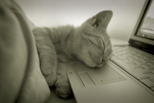 iFact Có thể bạn chưa biết: Bí mật của giấc ngủ - anh 5