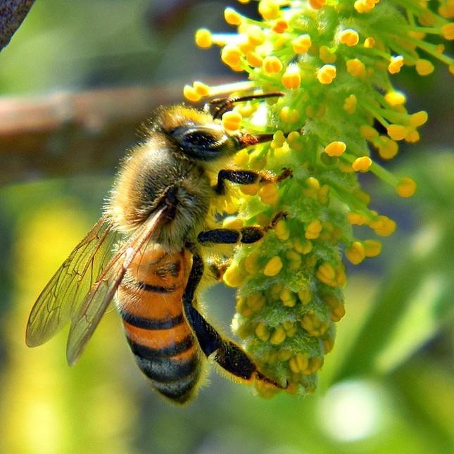 iFact Có thể bạn chưa biết: Mật ong có tuổi thọ trên 3.000 năm - anh 3