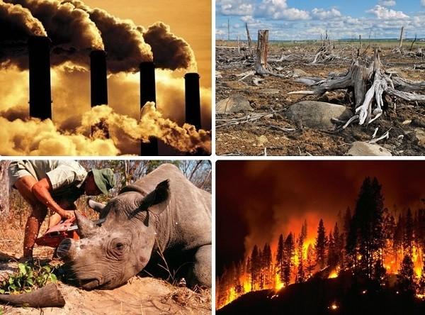 Bằng chứng Trái đất đang bước vào thời kỳ đại tuyệt chủng thứ 6 - anh 2