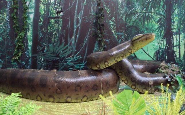 10 quái vật khổng lồ đã tuyệt chủng trên Trái đất - anh 11