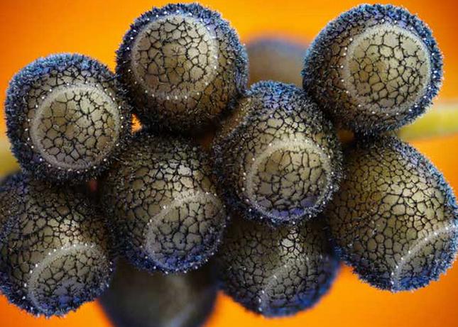 Thế giới 'khổng lồ' của sinh vật dưới kính hiển vi - anh 14