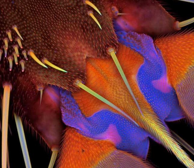 Thế giới 'khổng lồ' của sinh vật dưới kính hiển vi - anh 15