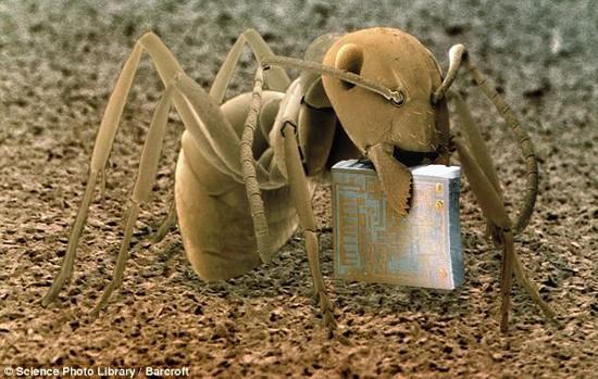 Thế giới 'khổng lồ' của sinh vật dưới kính hiển vi - anh 6