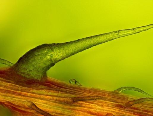 Thế giới 'khổng lồ' của sinh vật dưới kính hiển vi - anh 5
