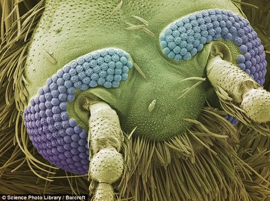 Thế giới 'khổng lồ' của sinh vật dưới kính hiển vi - anh 7