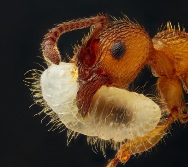 Thế giới 'khổng lồ' của sinh vật dưới kính hiển vi - anh 8