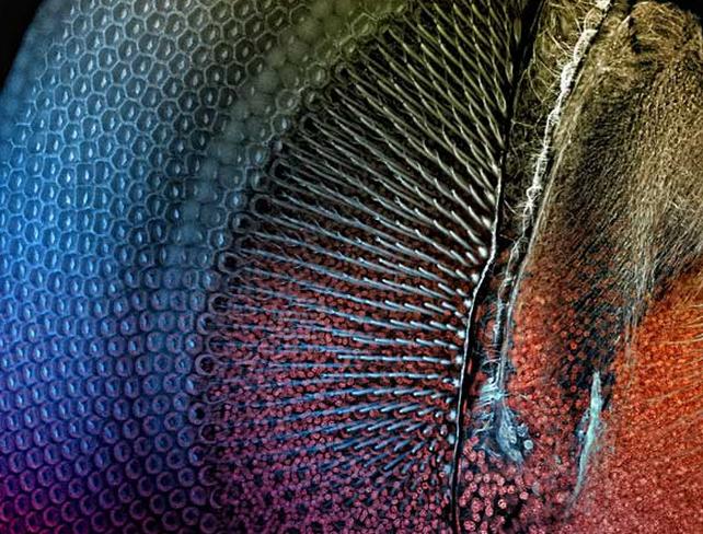 Thế giới 'khổng lồ' của sinh vật dưới kính hiển vi - anh 16