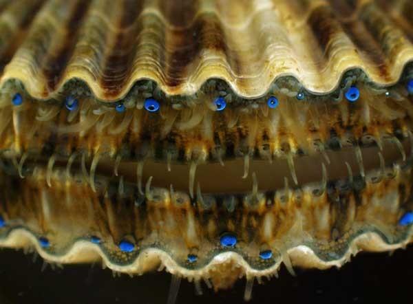 Thế giới 'khổng lồ' của sinh vật dưới kính hiển vi - anh 17