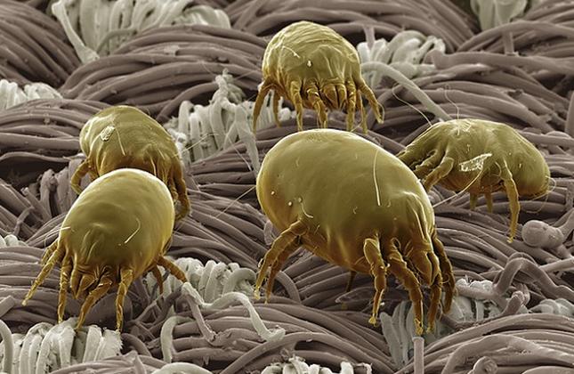Thế giới 'khổng lồ' của sinh vật dưới kính hiển vi - anh 3