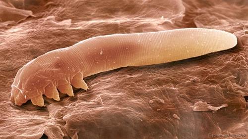 Thế giới 'khổng lồ' của sinh vật dưới kính hiển vi - anh 12