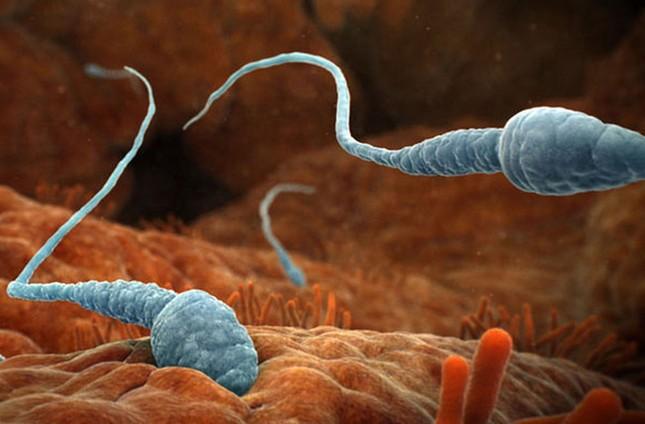 Thế giới 'khổng lồ' của sinh vật dưới kính hiển vi - anh 13