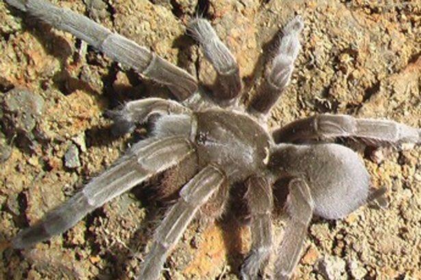 25.000 con nhện độc tấn công Australia - anh 1
