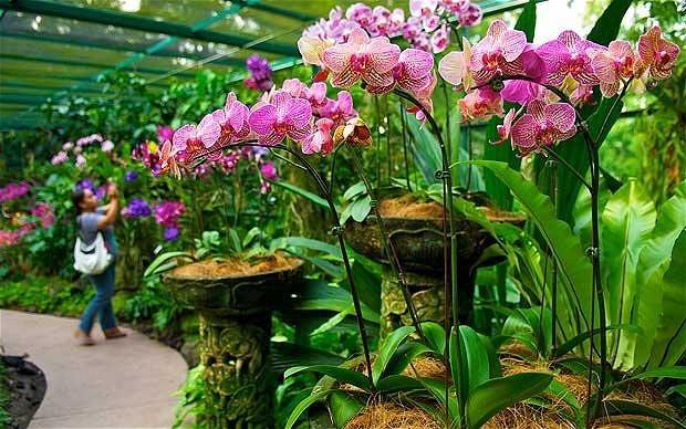 Khám phá vẻ đẹp của Vườn Bách thảo Singapore - Di sản Thế giới mới được UNESCO công nhận - anh 6