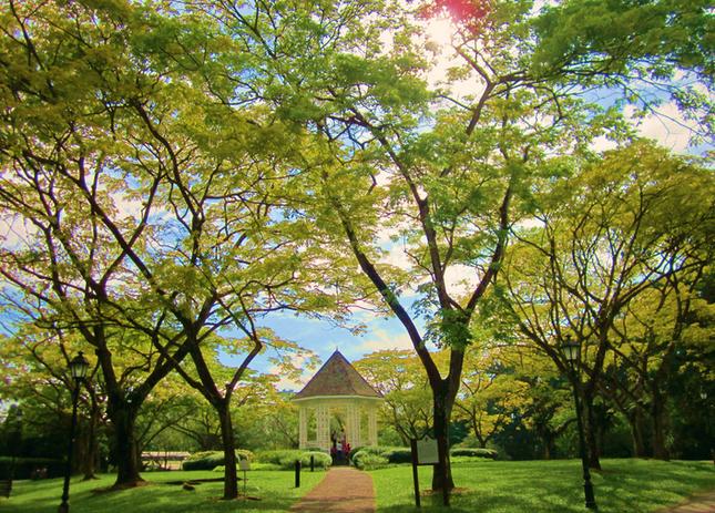 Khám phá vẻ đẹp của Vườn Bách thảo Singapore - Di sản Thế giới mới được UNESCO công nhận - anh 5