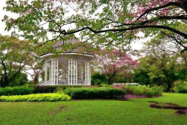 Khám phá vẻ đẹp của Vườn Bách thảo Singapore - Di sản Thế giới mới được UNESCO công nhận - anh 4