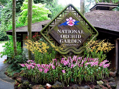 Khám phá vẻ đẹp của Vườn Bách thảo Singapore - Di sản Thế giới mới được UNESCO công nhận - anh 3