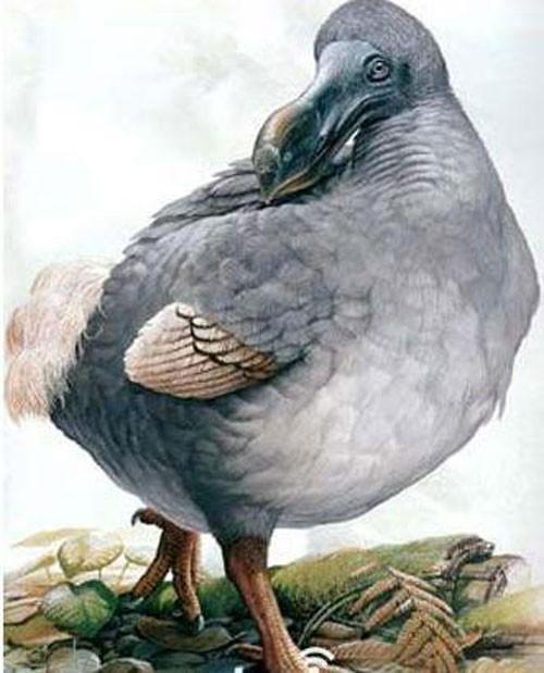 10 động vật tuyệt chủng thời cổ đại có hi vọng sống lại - anh 2