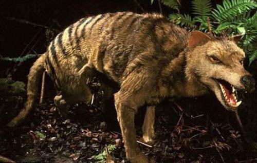 10 động vật tuyệt chủng thời cổ đại có hi vọng sống lại - anh 3