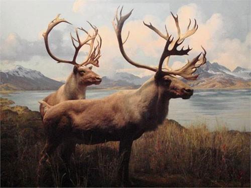 10 động vật tuyệt chủng thời cổ đại có hi vọng sống lại - anh 7