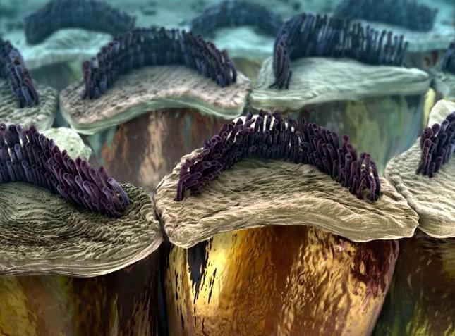 'Soi' cơ thể người 'khổng lồ' dưới kính hiển vi - anh 1
