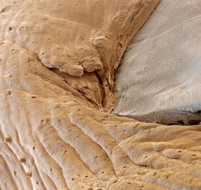'Soi' cơ thể người 'khổng lồ' dưới kính hiển vi - anh 4